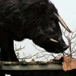 'Beasts of the Southern Wild': Quvenzhané Wallis Steals the Show