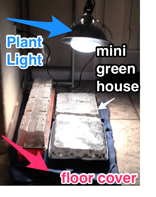 mini green house