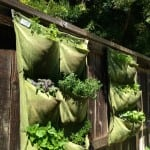 Cramped for Space, But Got a Fence? Consider 'Pocket' Gardening