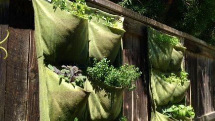health, food, pocket garden, nutrition, gardening, vegetables, organic, DIY, home, dining,