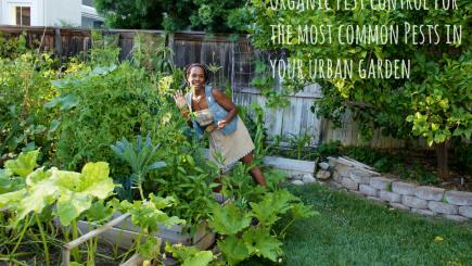 garden, outdoors, hobby, home, backyard, recreation, food, vegetables, fruits, caterpillar, pets, Home Depot, bugs, animals, Earth, nature, California, lifestyle, advice,